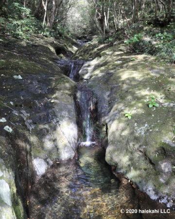 登龍峠・ポットホール 苔の森散策コース